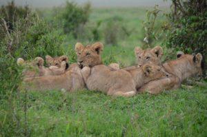 TRAVEL TIPS FOR KENYA